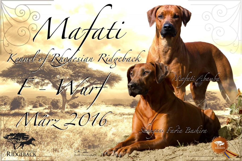 Mafati Abamba - Shangani Fadia Bashira